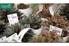 Les plantes faciles botanic®