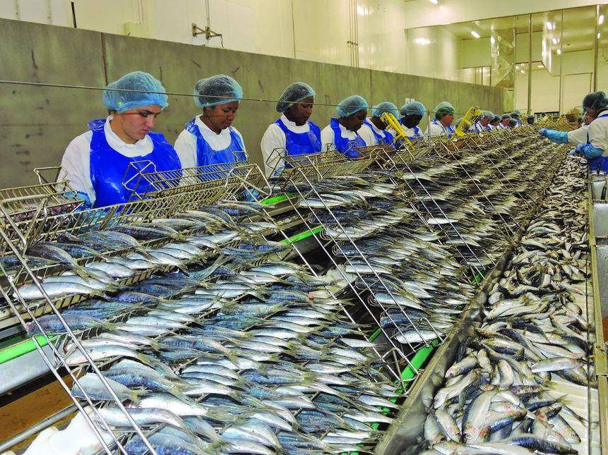 Chancerelle le roi de la sardine epicerie alimentation - Conserve de sardines maison ...