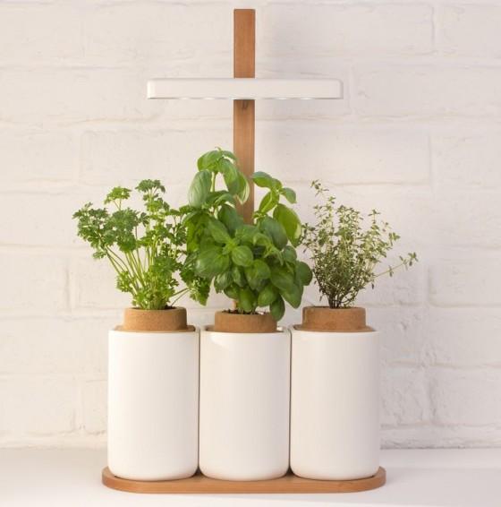lilo de pr t pousser un objet connect pour les herbes aromatiques de pr t pousser. Black Bedroom Furniture Sets. Home Design Ideas