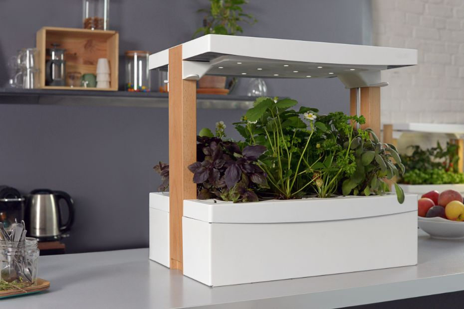 fresh square le potager d int rieur qui fruits et. Black Bedroom Furniture Sets. Home Design Ideas
