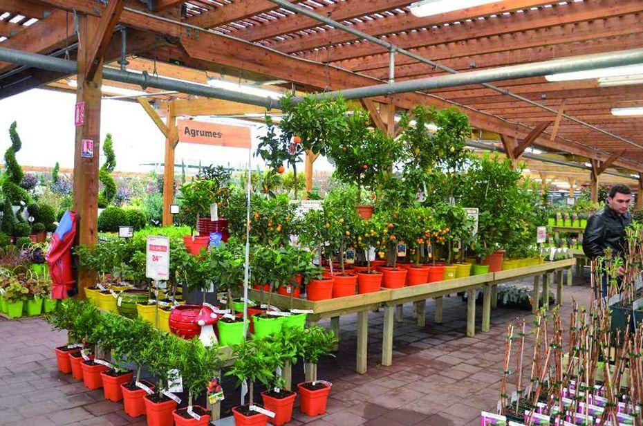 Le jardin fait grise mine bricolage jardinage for Vegetaux exterieur