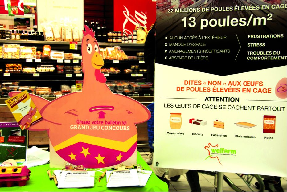 welfarm carrefour17.jpg