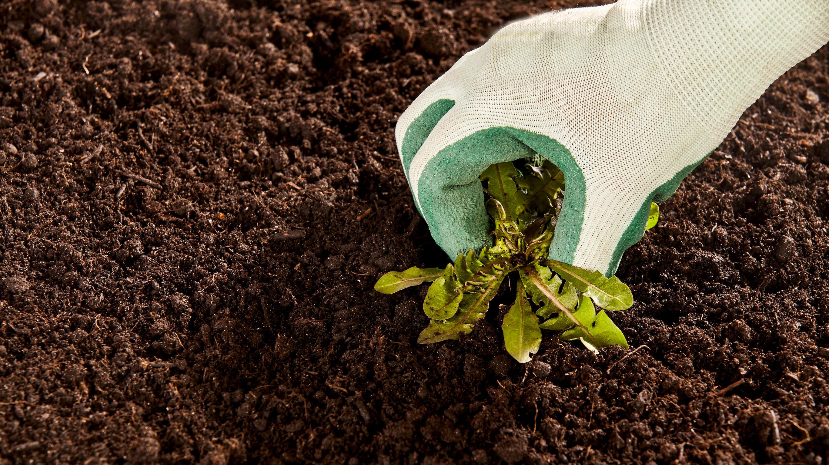 Auchan retire tous les produits de jardinage for Produit de jardinage